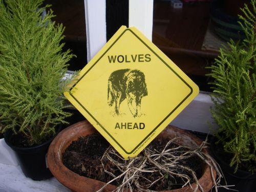 Wolfyellow
