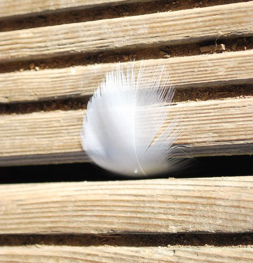 White feather1
