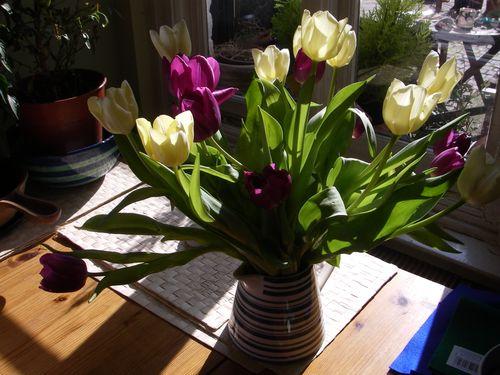 Tulips72
